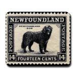 Vintage Newfoundland postage stamp design on lots of cool gift ideas for newfie lovers, mousepad, mugs, magnets, posters, prints