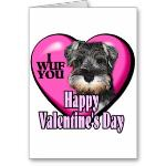 Miniature Schnauzer Valentines Day Card